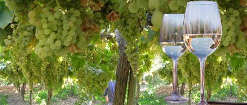 Un buen clima para las Uvas