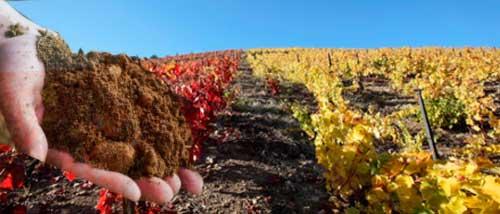 Un buen Terreno para las Uvas