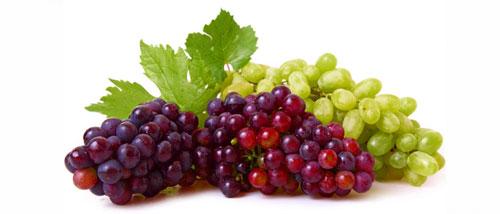 La Uva y el Viñedo