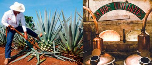 el tequila de calidad