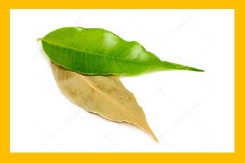 Laurel (hierba fina)