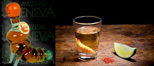 Gusano Maguey del tequila