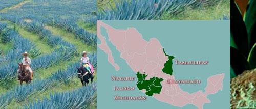 El tequila mexicano